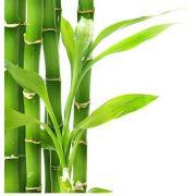 Bambuszrost liszt 25kg lédig