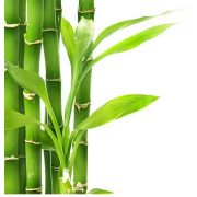 Bambuszrost liszt 25kg lédig B30LB