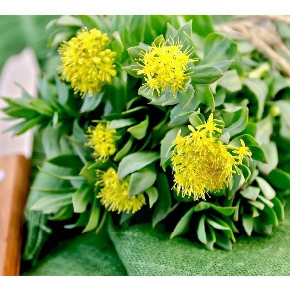 Rhodiola Rosea – Aranygyökér 60db kapszula Vitaking