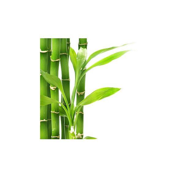 Bambuszrost liszt 20kg lédig B200