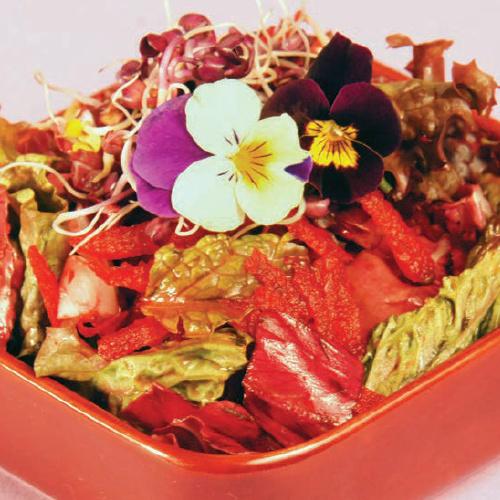 Bíbor varázs saláta